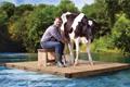 Молочные реки – творожные берега