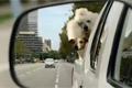 Пес-ловелас в рекламе МТС