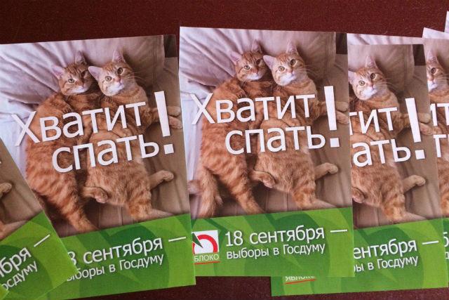 На предвыборных листовках новосибирского «Яблока» появились всемирно известные коты.