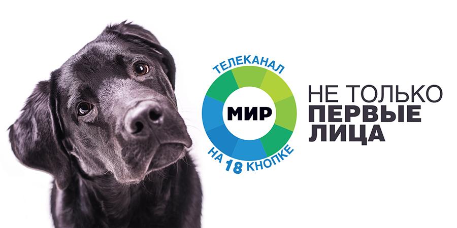 Телеканал «МИР» запустил собаку в эфир и в метро