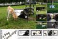 """Нестандартная реклама """"Perfect Fit Dogs""""  Агентство: Mark BBDO  Бренд: Perfect Fit  18 Московский международный фестиваль рекламы RedApple, 2008 Шорт-лист (Медиа-проекты (Нестандартные решения в медиа))"""