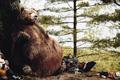 "Печатная реклама ""Fat Bear""  Агентство: BBDO Canada  Рекламодатель: Chrysler Canada Inc  Бренд: Jeep"