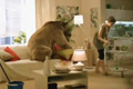 "Телереклама ""Медведь""  Агентство: Ark Scholz & Friends (ранее - Ark Thompson)  Рекламодатель: ОБИ Франчайзинговый Центр  Бренд: Obi"
