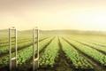 """Печатная реклама """"Vegetables""""  Агентство: Leo Burnett  Рекламодатель: Carrefour  Бренд: Carrefour"""