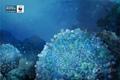 "Печатная реклама ""Brain Corals""  Агентство: BBDO Guerrero  Рекламодатель: WWF  Бренд: WWF"