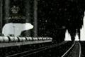 """Телереклама """"Попробуй настоящее, 1""""  Агентство: PILOTAZh  Рекламодатель: Московская Пивоваренная Компания  Бренд: BEAR BEER"""