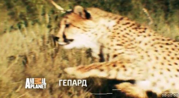 """Телереклама """"Гепард"""", рекламодатель:  Discovery Networks"""