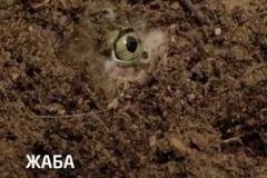 """Телереклама """"Жаба""""  Рекламодатель: Discovery Networks"""
