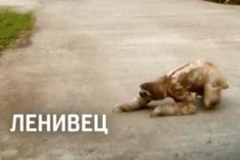 "Телереклама ""Ленивец""  Рекламодатель: Discovery Networks"