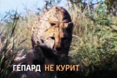 """Телереклама """"Гепард""""  Рекламодатель: Discovery Networks"""